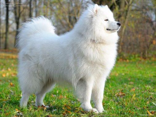 Ý nghĩa và điềm báo của giấc mơ thấy chó như thế nào