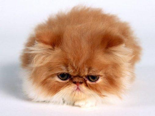 Mơ thấy mèo và những ý nghĩa của giấc mộng chiêm bao thấy mèo