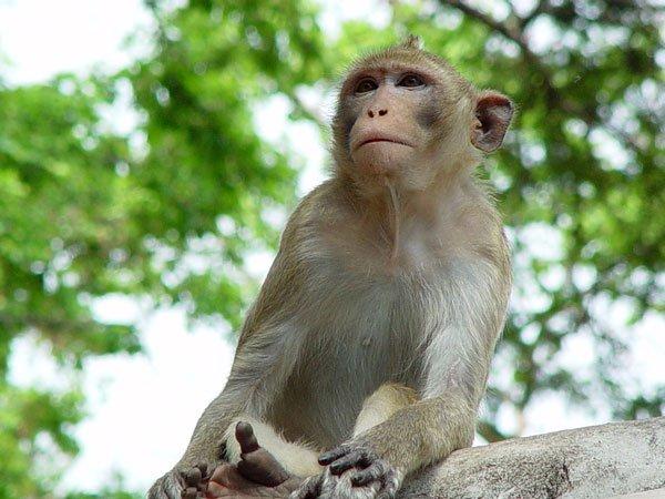 Nằm mơ thấy khỉ có ý nghĩa gì