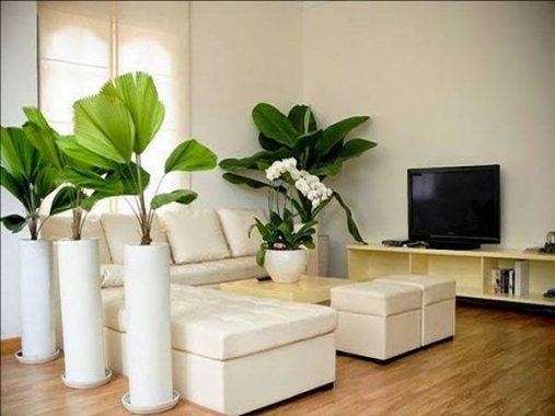 Yêu cầu trồng cây phong thủy trong nhà