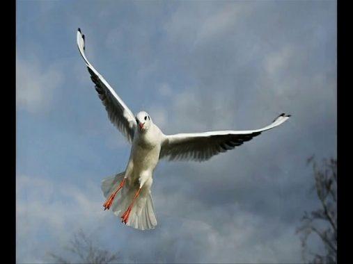Chim bay vào nhà mang đến cho bạn những điềm báo gì?
