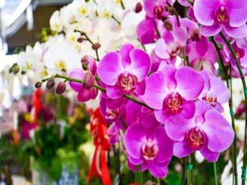 Ngủ mơ thấy hoa lan đánh số mấy ? là điềm tốt hay xấu ?