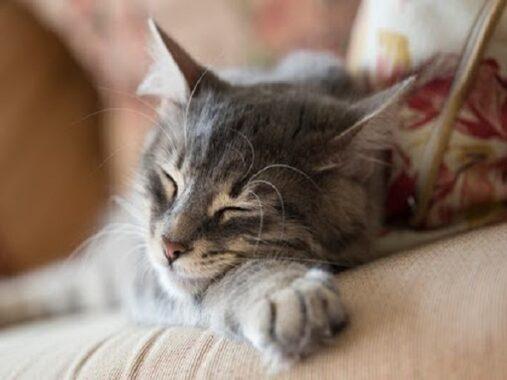 Mơ thấy mèo chết là điềm gì – Chiêm bao thấy mèo chết đánh con gì